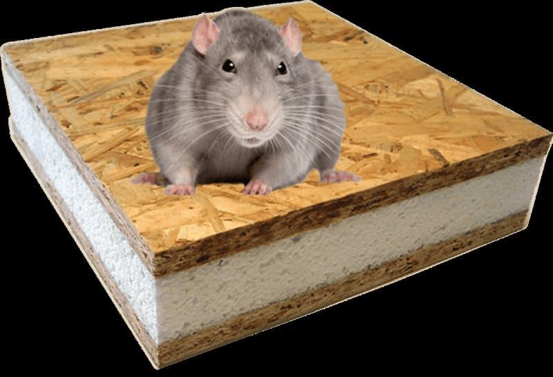 Живут ли мыши в SIP панелях